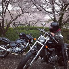 バイク/LIMIAおでかけ部/風景 おとぉと 初プチツー 🌸 間に合った~(…
