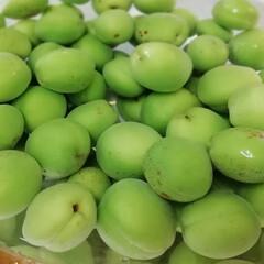 梅酒作り/PlumWine/梅シロップ/PlumSyrup/梅 庭の梅の木から収穫した青梅で 初めての梅…(2枚目)
