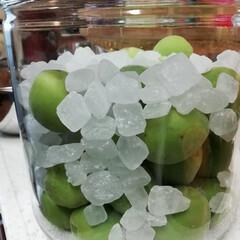 梅酒作り/PlumWine/梅シロップ/PlumSyrup/梅 庭の梅の木から収穫した青梅で 初めての梅…(3枚目)