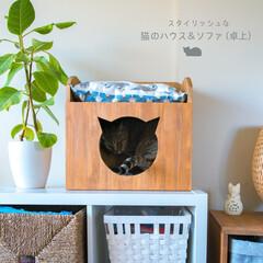 猫/猫ハウス/猫ソファ/猫インテリア/DIY/ハンドメイド 猫のハウス&ソファを作りました。ハウス機…