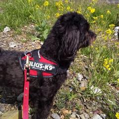 犬派/犬の散歩/犬と暮らす 散歩の途中で菜の花を見つけたよ🐶🎵