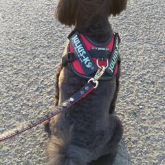 犬のお散歩/犬好き/犬と暮らす/犬 トリミングに行って来ました🐕️写真を撮ろ…(1枚目)