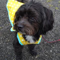 犬が好き/犬の散歩/犬と暮らす 今日の散歩は、雨☔️冷たいよ~🐶