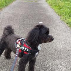 犬が好き/犬のいる生活/犬と暮らす トリミングに行って来ました🐶 スッキリし…(2枚目)