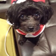 犬のいる暮らし/犬と暮らす/クリスマス2019 メリークリスマス🎄