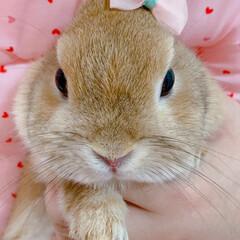 春/うさぎ/ピンク/ファッション 春色リボン🎀