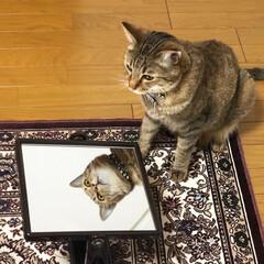 鏡の中/キジトラ/猫好き/愛猫家/LIMIAペット同好会/にゃんこ同好会/... ・ 鏡の中のてつろー🤣🤣 ・