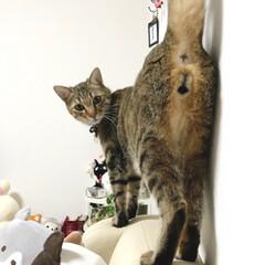 にゃんたま/猫変態/おちり/菜々緒ポーズ/おしり/愛猫家/... 猫のおしりが好きです_(´͈.̸̸̸̸̨…
