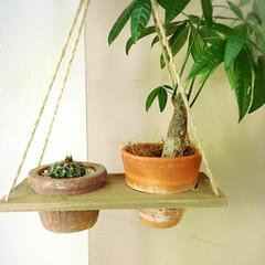 インテリア/自己満足/サボテン/パキラ/植物/簡単/... 廃材で😃 水やりのとき水漏れするからどう…