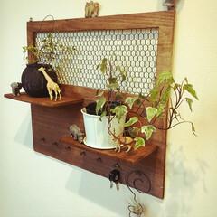 どうぶつ/ワイヤープランツ/ヘデラ/観葉植物/キーフック/簡単/... 廃材でキーフック?鍵かけ?名前はよくわか…