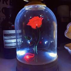 非常灯/薔薇/インテリア/ディズニー/美女と野獣/オシャレ/... 去年の夏にディズニーで買いました🚨 どう…(1枚目)