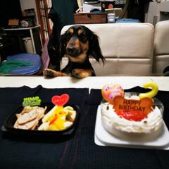 今日のわんこ/わんこ/犬のいる暮らし/犬/アミーゴ/2歳/... 【パン・パカ・バァーン🎉(^_^)∠※】…