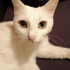 なんで猫ってこんなに可愛いの/白ねこ部/親バカ/野良猫/美猫/にゃんこ同好会 野良なのに美猫
