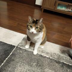 癒やし/猫のいる生活 (2枚目)