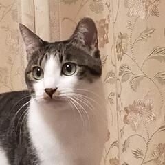 癒やし/猫のいる暮らし 今日は母の病院 凄く混んで予約なのに 4…(1枚目)
