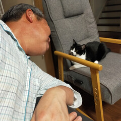 猫のいる生活 うちの猫様たちはみんな女のコだからがノン…