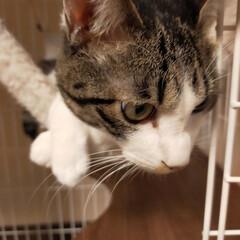 癒やし/猫のいる暮らし こんにちは😊 今日も猫たちに癒やされて …(2枚目)
