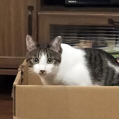 猫好き/猫と暮らす 箱入り娘たち😺