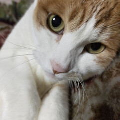 癒し系/実家猫/猫派 今日は母の右目の手術が終わり実家にお泊り…