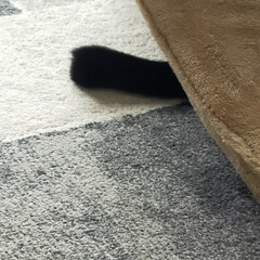 猫のいる暮らし/猫屋敷 今日は暖かくなりました ☀ 猫たちはのん…(2枚目)