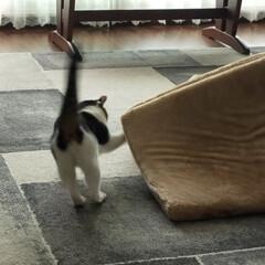 猫のいる暮らし/猫屋敷 今日は暖かくなりました ☀ 猫たちはのん…(6枚目)