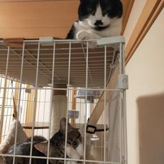 元気/猫のいる暮らし おはようございます😊 今日も猫たちは朝か…(1枚目)