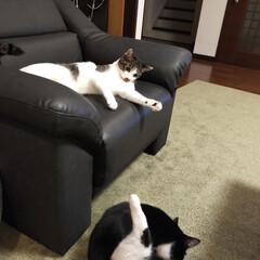 癒し/猫のいる暮らし 最近のニャンズ達😺(3枚目)