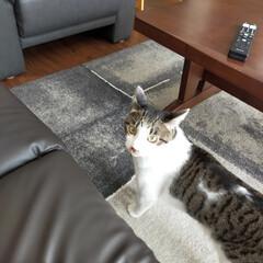 癒やし/猫のいる生活 (5枚目)