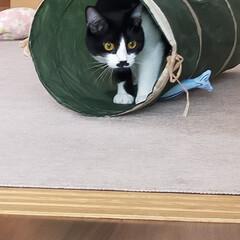 猫のいる暮らし/猫屋敷 今日は暖かくなりました ☀ 猫たちはのん…(1枚目)