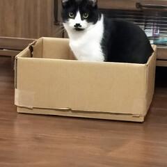 猫好き/猫と暮らす 箱入り娘たち😺(2枚目)