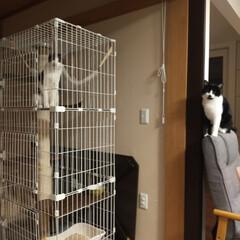 猫のいる生活 肩こり頭痛で横になっていたらなんか視線を…(2枚目)