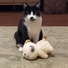 お友だち/マリ/ぬいぐるみ/猫のいる暮らし UFOキャッチャーでたまたまGET下猫の…(3枚目)