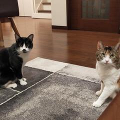 癒やし/猫のいる暮らし こんにちは😊 今日も猫たちに癒やされて …(5枚目)
