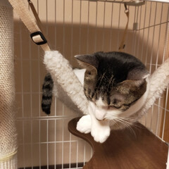 癒やし/猫のいる暮らし こんにちは😊 今日も猫たちに癒やされて …(6枚目)