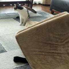 猫のいる暮らし/猫屋敷 今日は暖かくなりました ☀ 猫たちはのん…(3枚目)