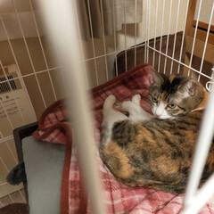 癒やし/猫のいる暮らし こんにちは😊 今日も猫たちに癒やされて …(3枚目)