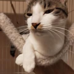 癒やし/猫のいる暮らし こんにちは😊 今日も猫たちに癒やされて …(1枚目)