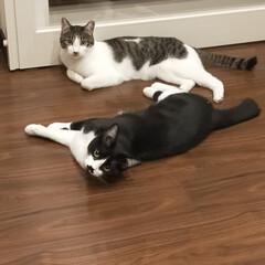 癒し空間/猫と暮らす 今日のニャンズ😺 カワイイ🥰 私も😺柄の…(2枚目)