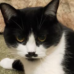 デルタ株/コロナに負けない/猫のいる暮らし/コロナ禍/ニャンズ やっとコロナの注射の予約が出来ました😅 …(1枚目)