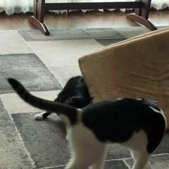 猫のいる暮らし/猫屋敷 今日は暖かくなりました ☀ 猫たちはのん…(5枚目)