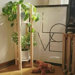 観葉植物/プランタースタンド/100均DIY/グリーン/DIY/100均/... 下に伸びる綺麗なグリーンが映えるプランタ…