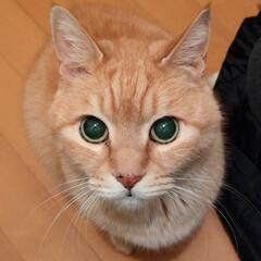 LIMIAペット同好会/フォロー大歓迎/ペット/ペット仲間募集/猫/にゃんこ同好会/... 玄関でおかえり~😸💕 しゅら16歳です😄…