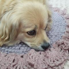 円座/かぎ針編み/犬との暮らし/ペキックス/セリア/ハンドメイド/... . ポプコーン編みで円座 . のん のカ…