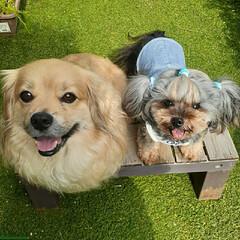 笑顔/犬との生活/犬との暮らし/ヨープー/ペキックス ニコニコ~💕  インスタの🐶友さんから着…
