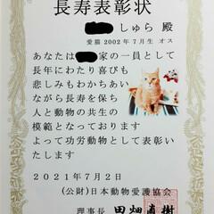 保護猫/18歳猫/茶トラ/木製アートフレーム/100均/セリア/... 🌟長寿表彰🌟  しゅらを長寿猫として表彰…(2枚目)