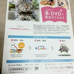 保護猫/18歳猫/茶トラ/木製アートフレーム/100均/セリア/... 🌟長寿表彰🌟  しゅらを長寿猫として表彰…(4枚目)