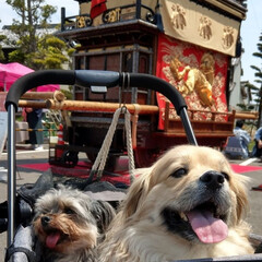 ヨープー/ペキックス/犬好きな人と繋がりたい/犬/春のフォト投稿キャンペーン/令和の一枚/... 5月3日 お祭りに山車を見に行って来たよ…