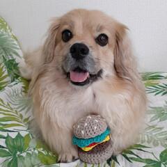 編みぐるみハンバーガー/編みぐるみ/かぎ針編み/ヨープー/ペキックス/犬 編みぐるみハンバーガー🍔 れんにあげるよ…