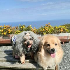 犬と旅行/犬との生活/犬との暮らし/ミックス犬/ヨープー/ペキックス/... 10月13日~15日① 伊勢志摩旅行~🎶…