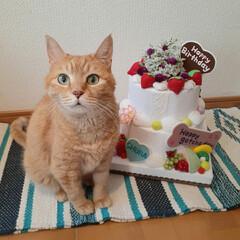 ハンドメイド/フェルトケーキ/うちの子記念日/お誕生日/18歳猫/保護猫/... 昨日8月5日は しゅらの18回目のうちの…